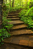 Stone Stairway to deep forest Stock Photos