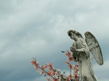 Stone statue of an angel, with wings, praying. stock photos