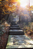 Stone step road in autumn Royalty Free Stock Photos