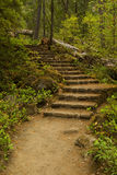 Stone Step Trail Stock Image