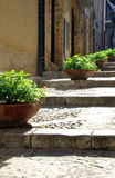 Stone steps. Stone paved steps with potted plants in Italy Stock Photography