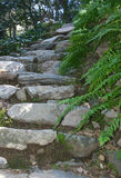 Stone Steps. Old steps made of stone extending upward amidst ferns Stock Image
