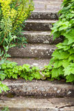Stone steps ascending. Overgrown and weathered stone steps ascending Stock Photos