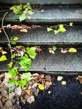 Stone steps and autumn leaves Royalty Free Stock Photos