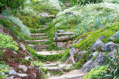 Stone steps and beautiful flowers. Stock Photos