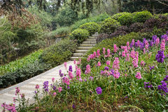 Stone steps on blossoming hillside Royalty Free Stock Images