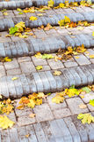 Stone steps covered with fallen yellow maple leaves Royalty Free Stock Image