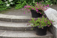 Stone steps decorated by flower pots Stock Photo