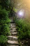 Stone steps in deep forest Stock Image