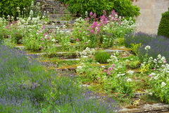 Stone steps  with flowers Royalty Free Stock Images