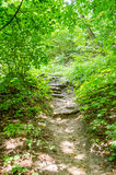 Stone steps leading to the trees in the park on trees in Lviv Royalty Free Stock Photos