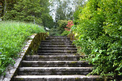 Stone Steps leading to an English Garden Royalty Free Stock Photography