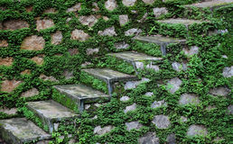 Stone steps after monsoon. A set of stone steps covered in green plants after monsoon stock images