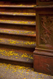 Stone steps in New York City Royalty Free Stock Images