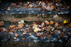 Stone steps with old foliage Royalty Free Stock Image