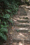 Stone steps Royalty Free Stock Photography