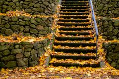 Stone steps with orange leaves. Colorful orange & yellow fallen leaves blanket a stone stairway through stone retaining walls Stock Photography