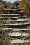 Stone steps overgrown with grass Stock Photography
