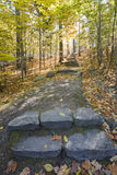 Stone Steps on Path in Forest royalty free stock images