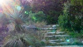 Stone steps in sunny late afternoon Texas park with yucca plant and lens flare stock images