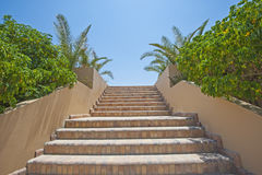 Stone steps in a tropical garden Stock Photography