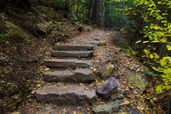 Stone Steps in the woods in autumn Royalty Free Stock Photography
