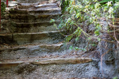 Stone steps in the woods Royalty Free Stock Photo