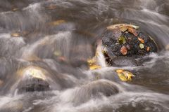 A stone in a stream covered with moss and yellow leaves. Surrounded by rapid waters Stock Photo
