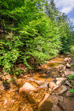 Stone stream in the mountains of Beskid Stock Photo