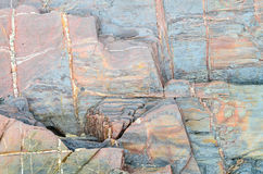 Stone surface background Royalty Free Stock Photos