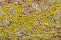 The stone surface covered with a moss and a lichen. The old, abstract, stone surface covered with a multi-colored moss and a lichen. granite Royalty Free Stock Photos