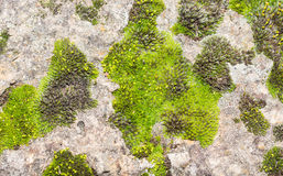 Stone surface with green moss background. Stock Images