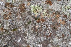 Stone surface with lichen 2 - for background royalty free stock photography