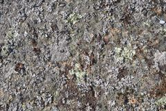 Stone surface with lichen 3 - for background. The surface of the gray stone is covered with lichens of azure, yellow, blue colors. Sliding light. Colorful nature stock photos