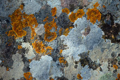 Stone surface with multycolored lichens Royalty Free Stock Images