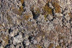 Stone surface texture. Gray stone surface texture, natural material background Stock Image