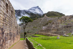 Stone terraces and a lone tree in the lost Inca city Royalty Free Stock Images