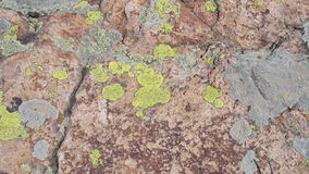 Stone texture Royalty Free Stock Photography