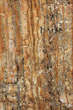 Stone_texture. A texture of an old stone Royalty Free Stock Images