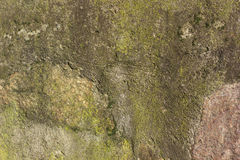 Stone texture background. Closeup of stone wall texture background, green shades Royalty Free Stock Images