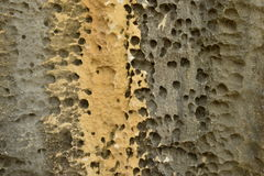 Stone texture background. Floating porosity of the rock mountain nature Stock Photo