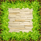 Stone texture background and green plant Caladium frame Royalty Free Stock Image