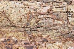 Stone  texture erosion Stock Photo