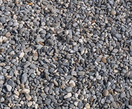 Stone texture - gravel of small gray and white round stones, abstract background pattern stock photography
