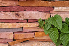 Stone texture with green leafs Stock Photography