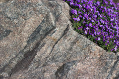 Stone texture with little violet flowerets Royalty Free Stock Photography