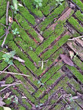 Stone texture and moss Royalty Free Stock Photography