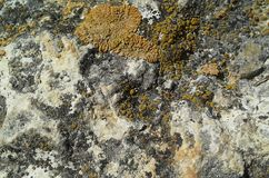 Stone texture with moss Royalty Free Stock Photo