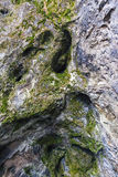 Stone texture and moss Royalty Free Stock Images
