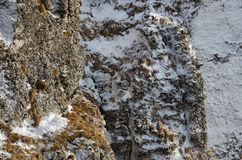 Stone texture. With snow from mountains Stock Image